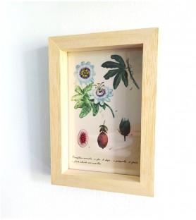 Postal passiflora enmarcada