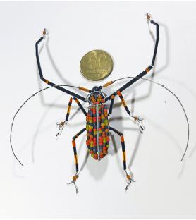 Escarabajo arlequín