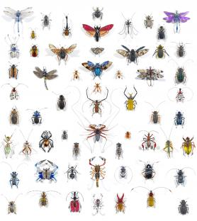 Gigantografía de Insectos